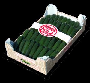 Cassetta-Zucchine-grandi-500