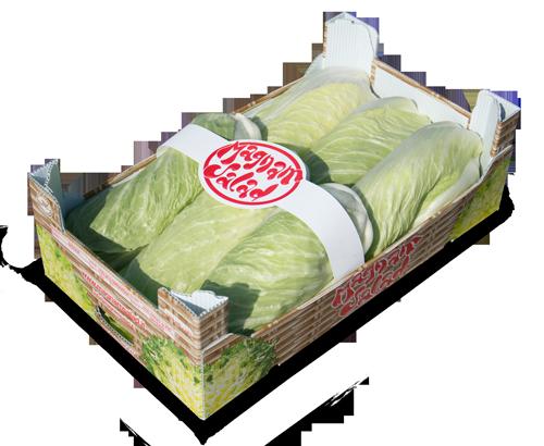 cassetta-pan-di-zucchero-magnam-500